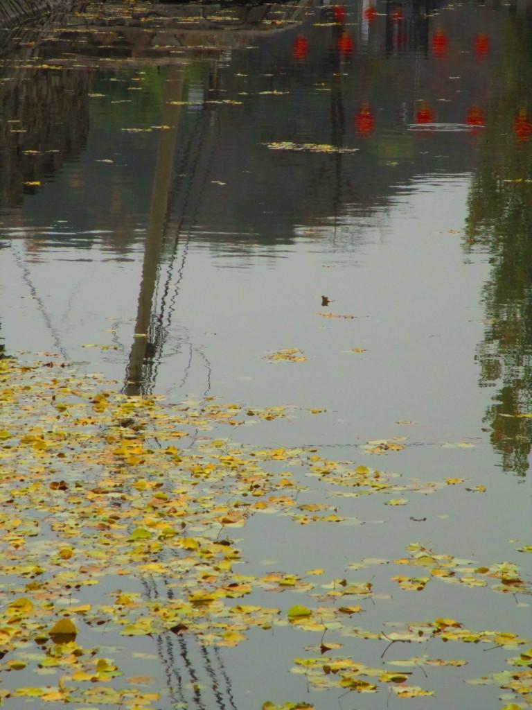 lanterne rosse e foglie gialle