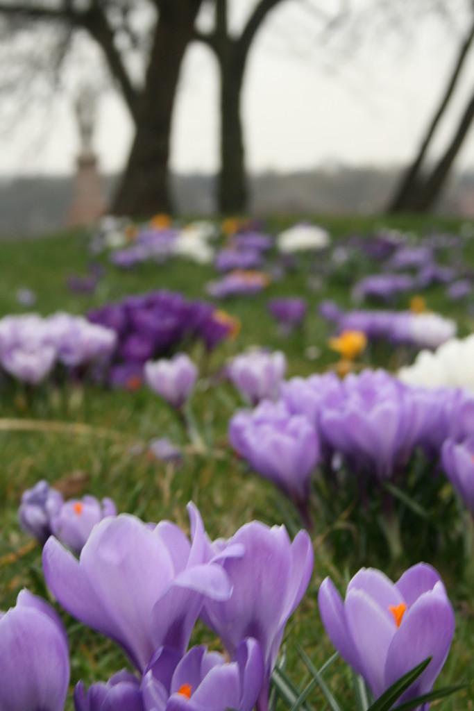 fioriviola_Leeds