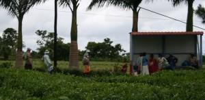 fermata dell'autobus a Mauritius