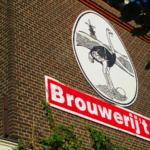 Bere birra ad Amsterdam