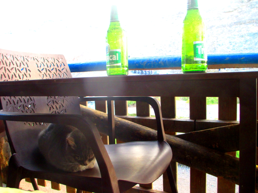 un gatto al tavolo del bar