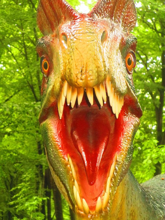 Dino Parc, Romania