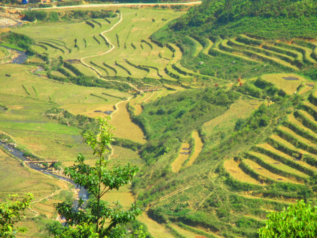 terrazze di riso a Sapa, Vietnam