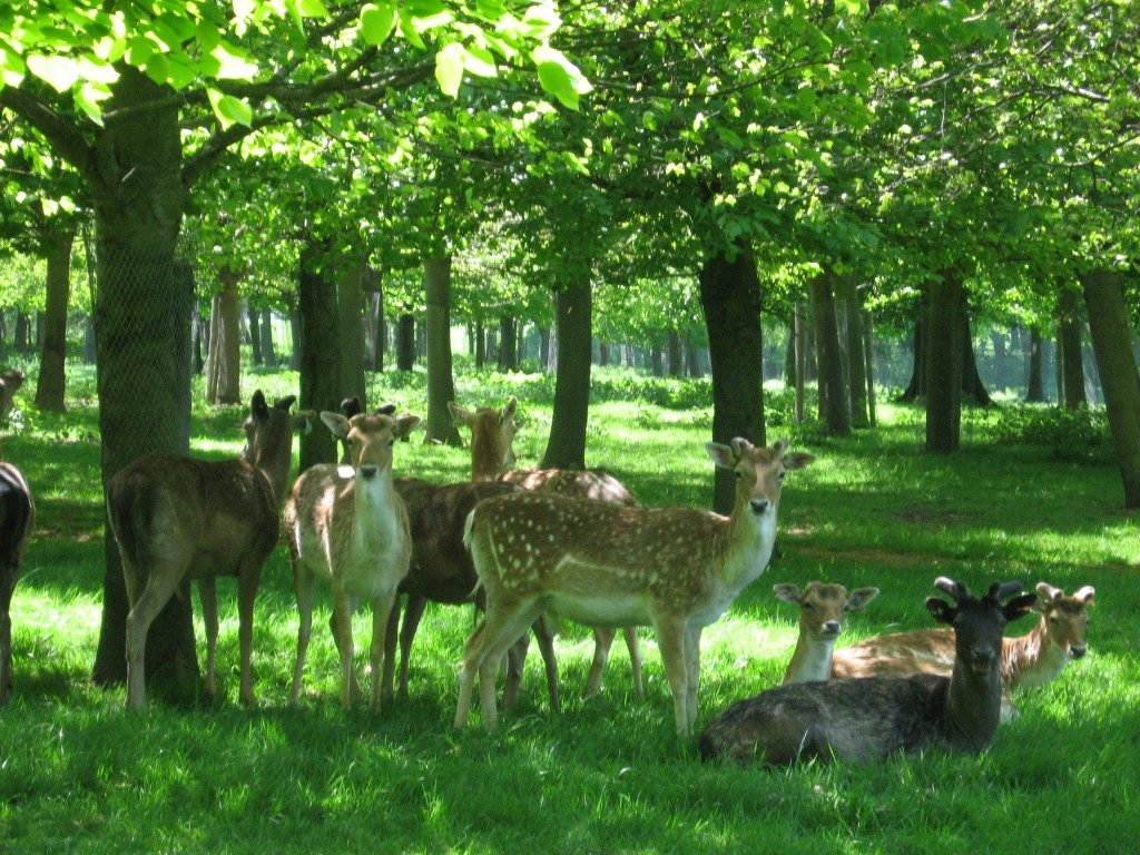 animali a Phoenix Park, Dublino
