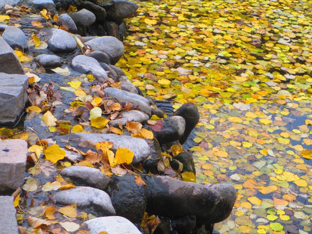 fiume con foglie gialle, Cina