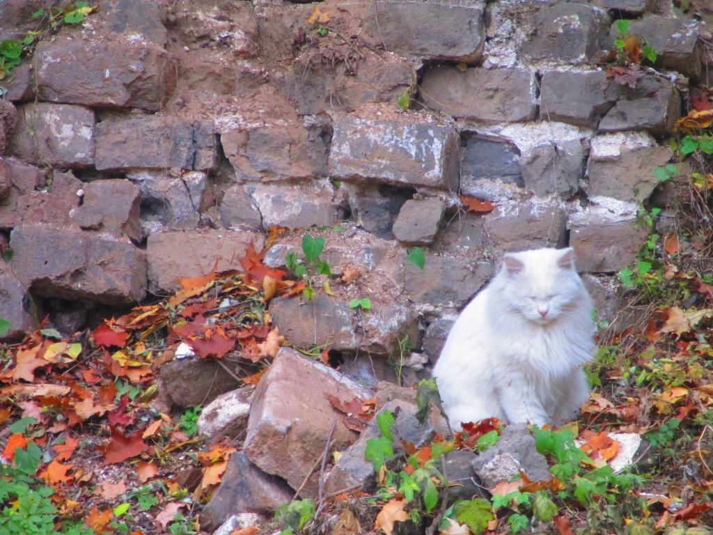 Un paffuto gatto bianco sulla grande muraglia
