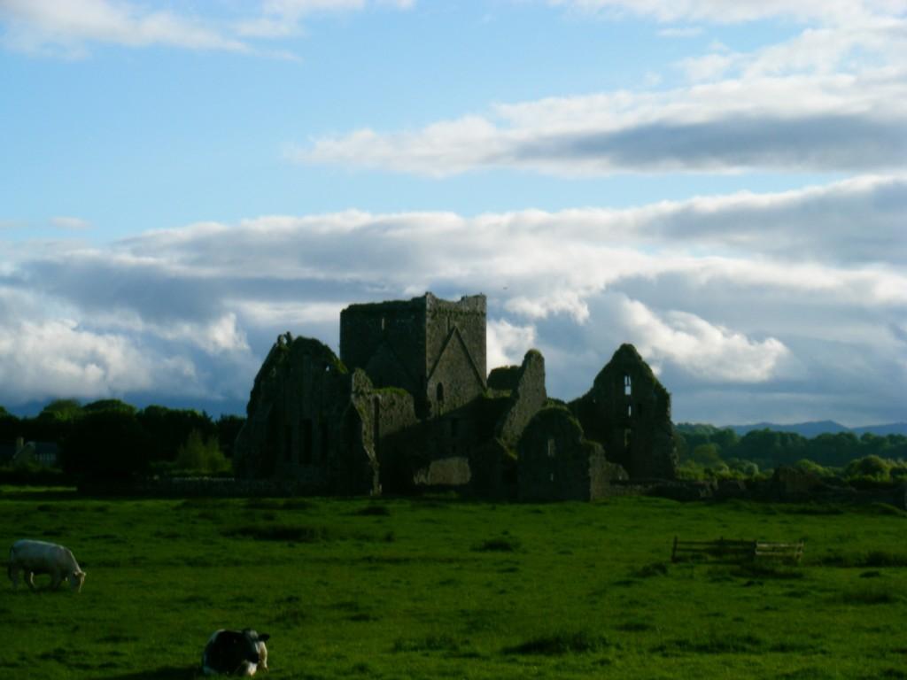 mucche a Cashel, contea Tipperary