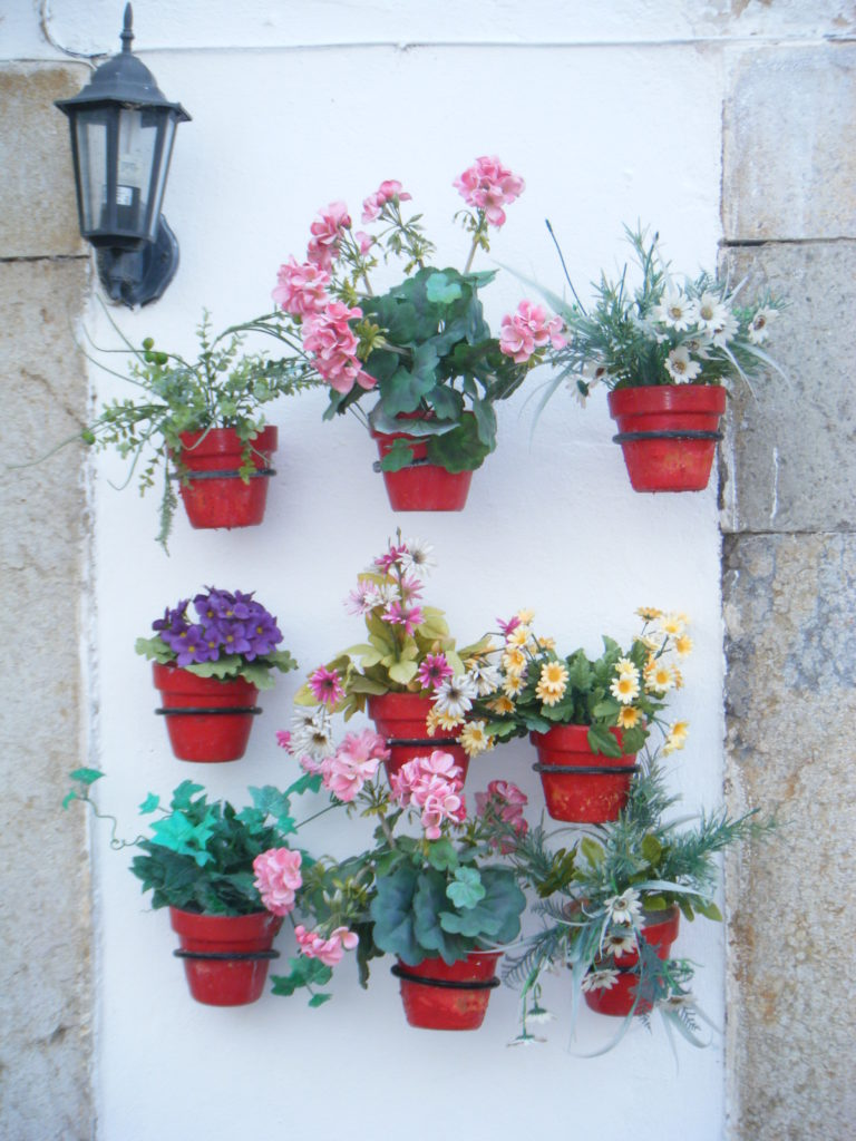 fiori in Algarve, Portogallo