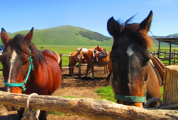 cavalli a Castelluccio di Norcia