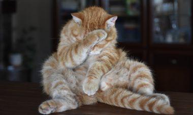 gatto imbarazzato
