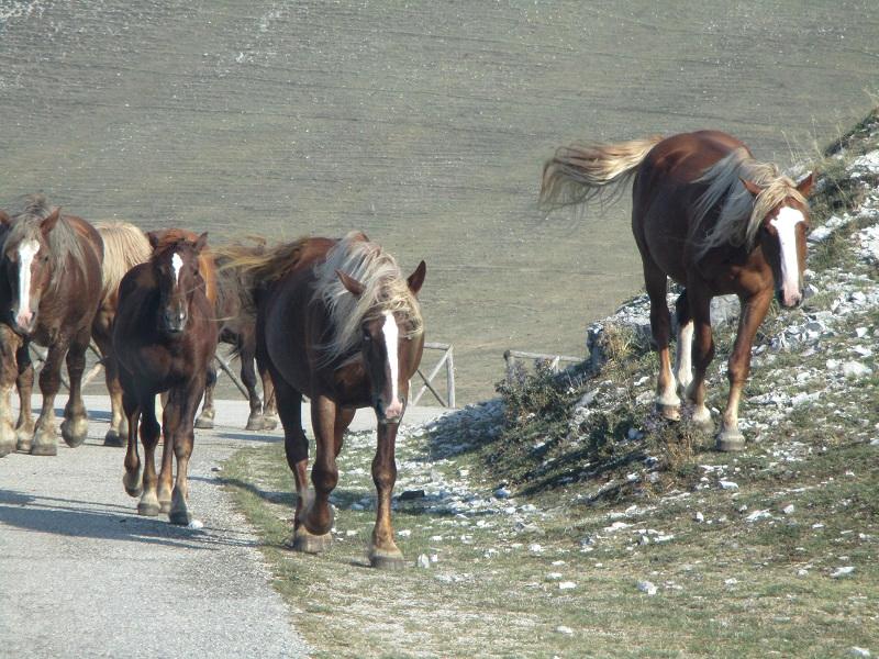 cavalli sul monte cucco