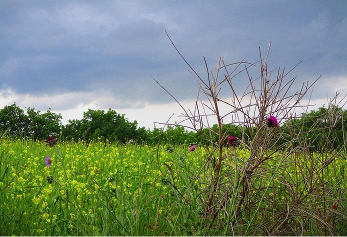 vegetazione via del trasimeno a piedi